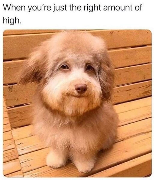 the right amount of high weed meme
